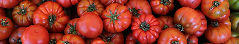 עגבניות משומרות
